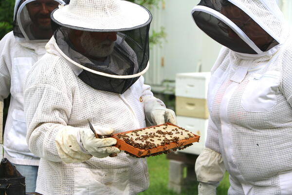 Bee photo 2